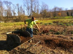 Wes spreading compost on top of the planted garlic