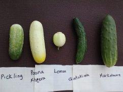 Meet the 5 cuke varieties we have this year.
