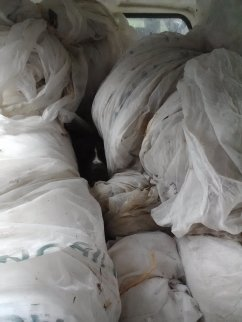 Utah napping in a pile of rolled up row cover
