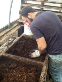 Wes sifting compost