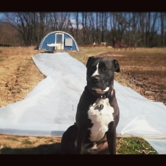 Utah presides over the 24x60 foot piece of plastic for the hoop house
