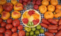 Tomato Array EDITED