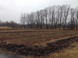 A field blinks open its eyes after the long winter