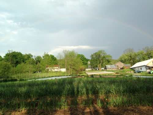 A rainbow over the farm while planting your winter squash