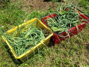 Scapes, scapes, scapes
