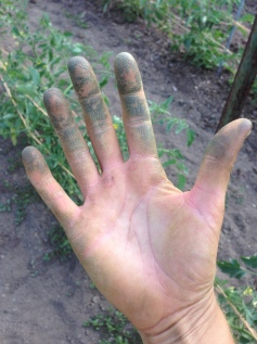 Green monster hands post-trellising