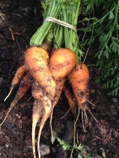 Carrot heart hug