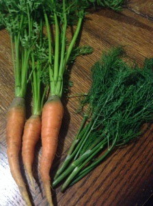 Carrots and dill