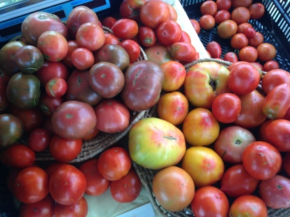 The first big tomato harvest