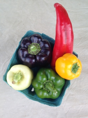 We are very slowly starting to see more color in our peppers.  We had 1 (yes, a whole 1!) red pepper to take to market this weekend.
