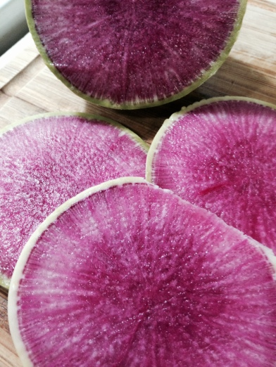 The magical colors of the watermelon radish
