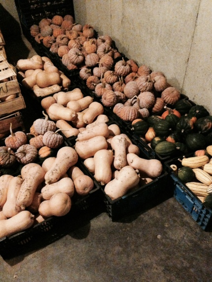 Winter squash sleeping in the root cellar, waiting to meet you.