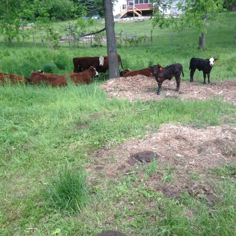 Gardiner members--be on the lookout for the new calves running around the farm!