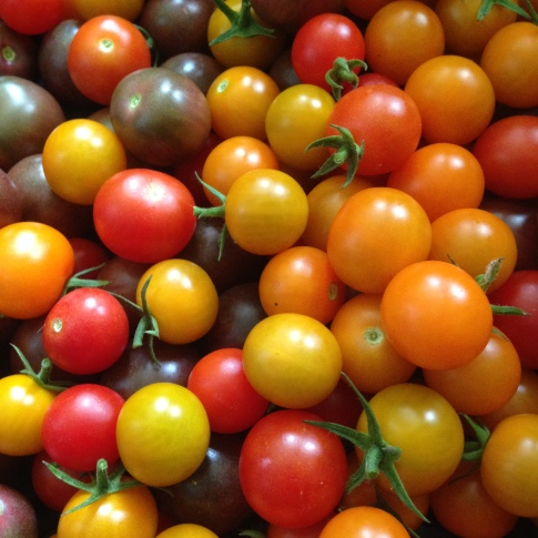 3 colorful varieties of cherry tomatoes