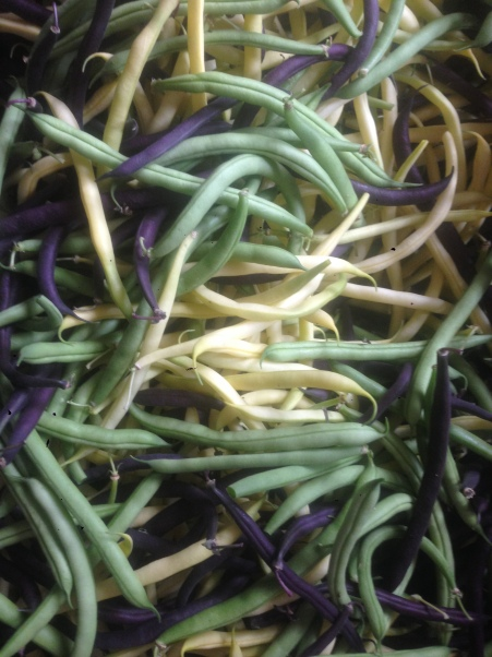 Beautiful tri-color beans: a pain to pick, but a joy to eat!