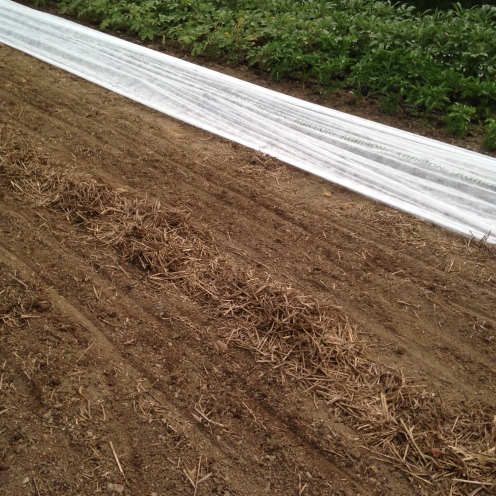 ....and hello freshly seeded arugula and spinach!