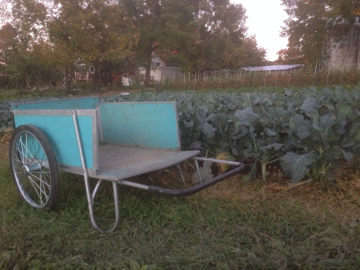 The loyal, ever-faithful and hardworking garden cart and the proud broccoli plants all wearing their blue hues.
