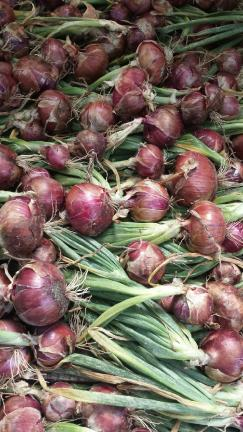 Lovely Rossa di Milano onions laid out to cure (for longer storage!).