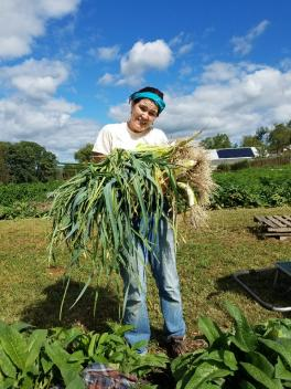 A before and after of Leeks! A big pile o' roots, layers, and stems before being trimmed up for bunching.