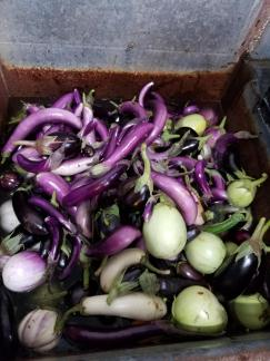 Eggplant loveliness in all its forms.